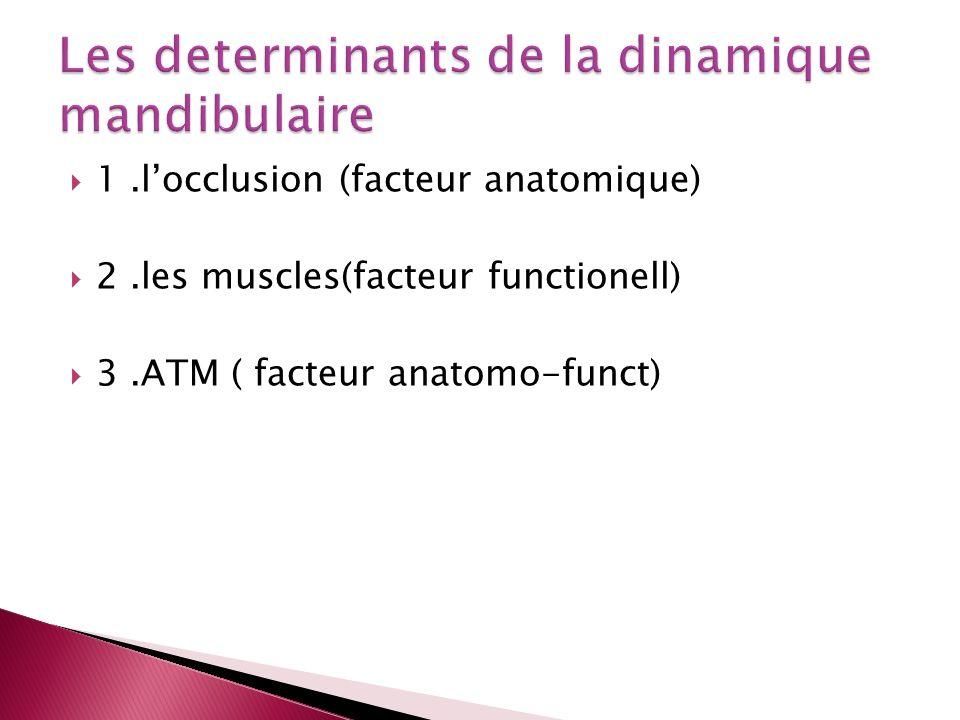 Les determinants de la dinamique mandibulaire