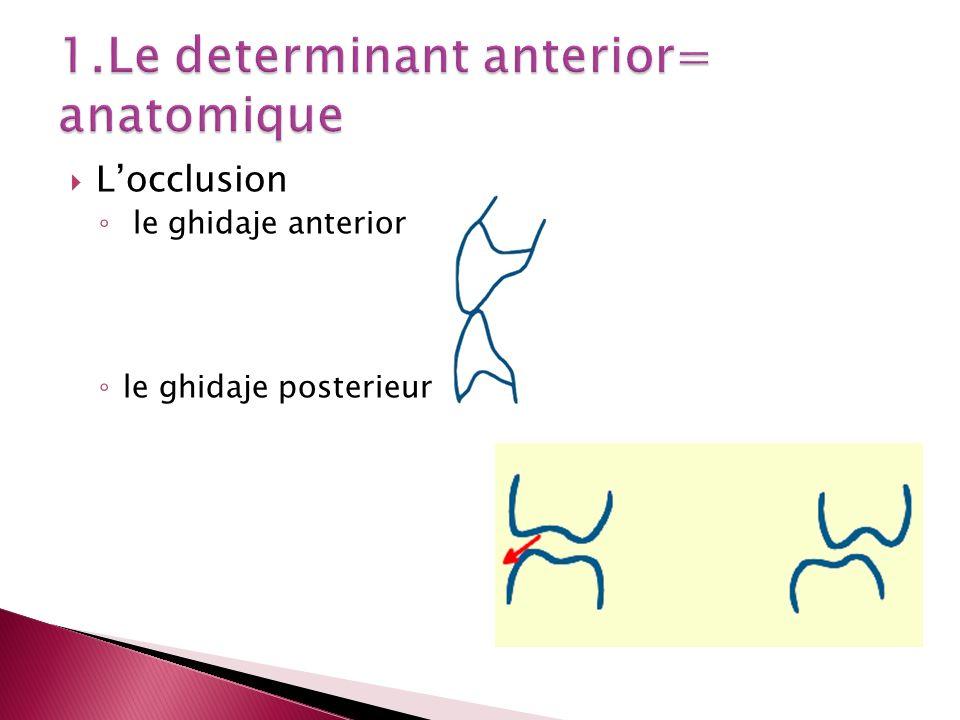 1.Le determinant anterior= anatomique