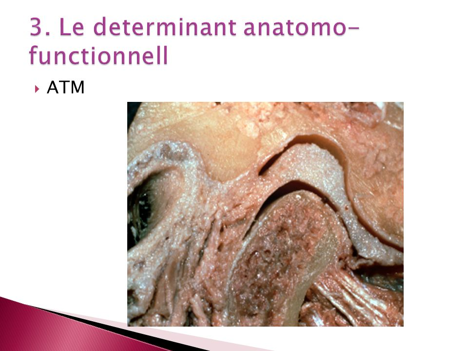 3. Le determinant anatomo-functionnell