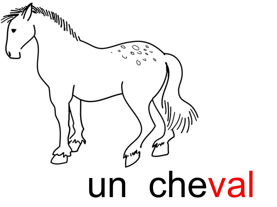 cheval un cheval