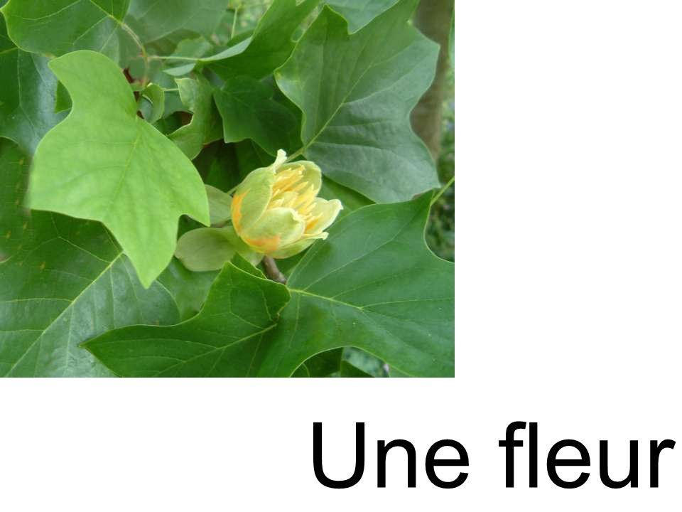 fleur Une fleur
