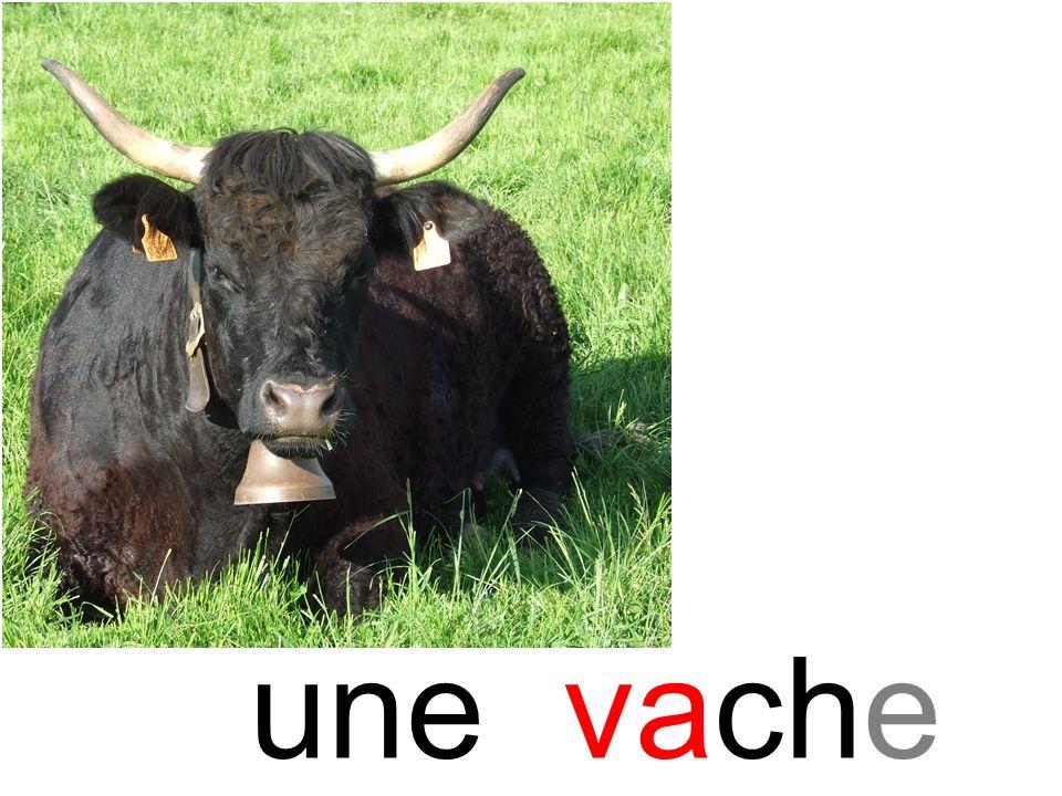 vache une vache