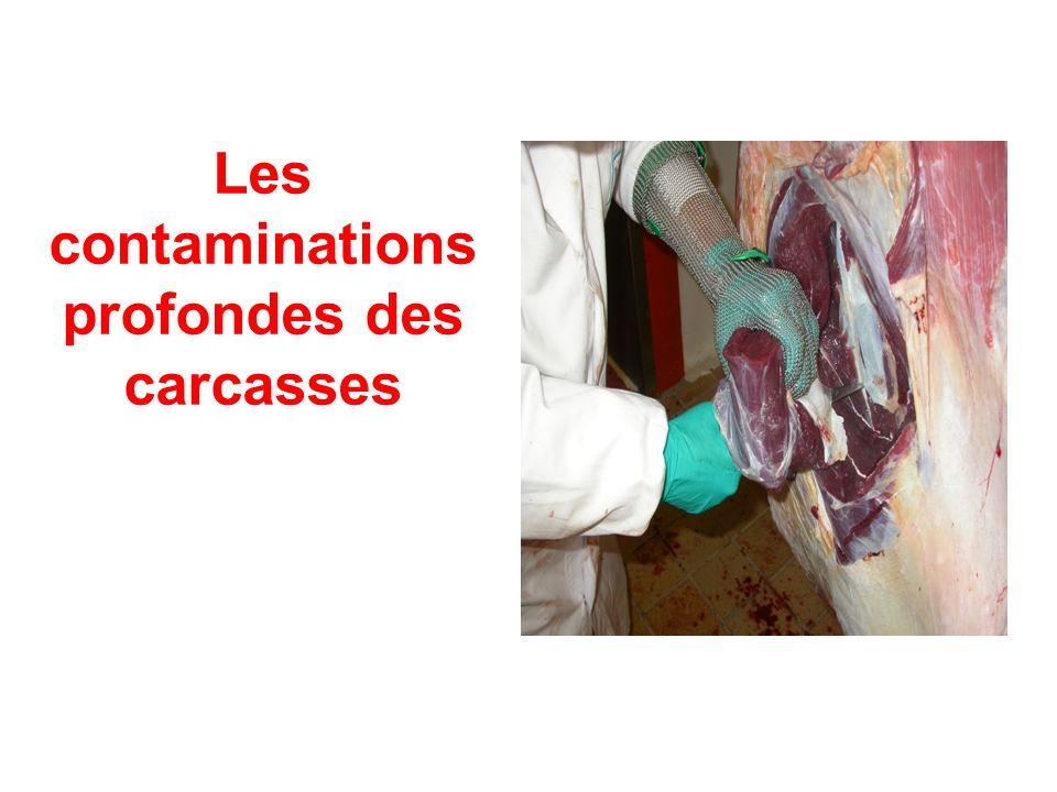 Les contaminations profondes des carcasses
