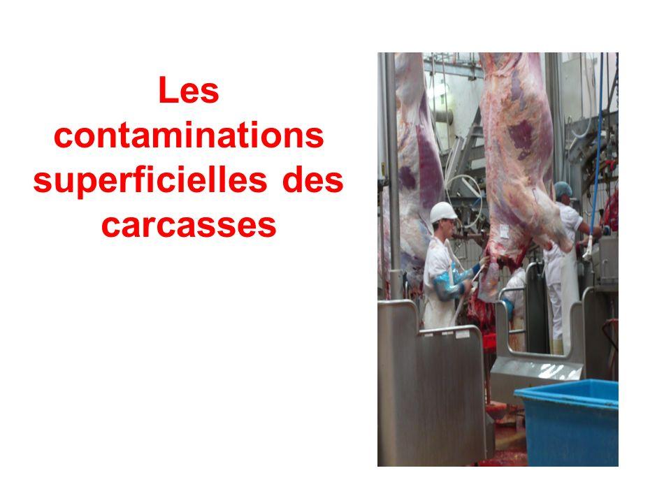 Les contaminations superficielles des carcasses