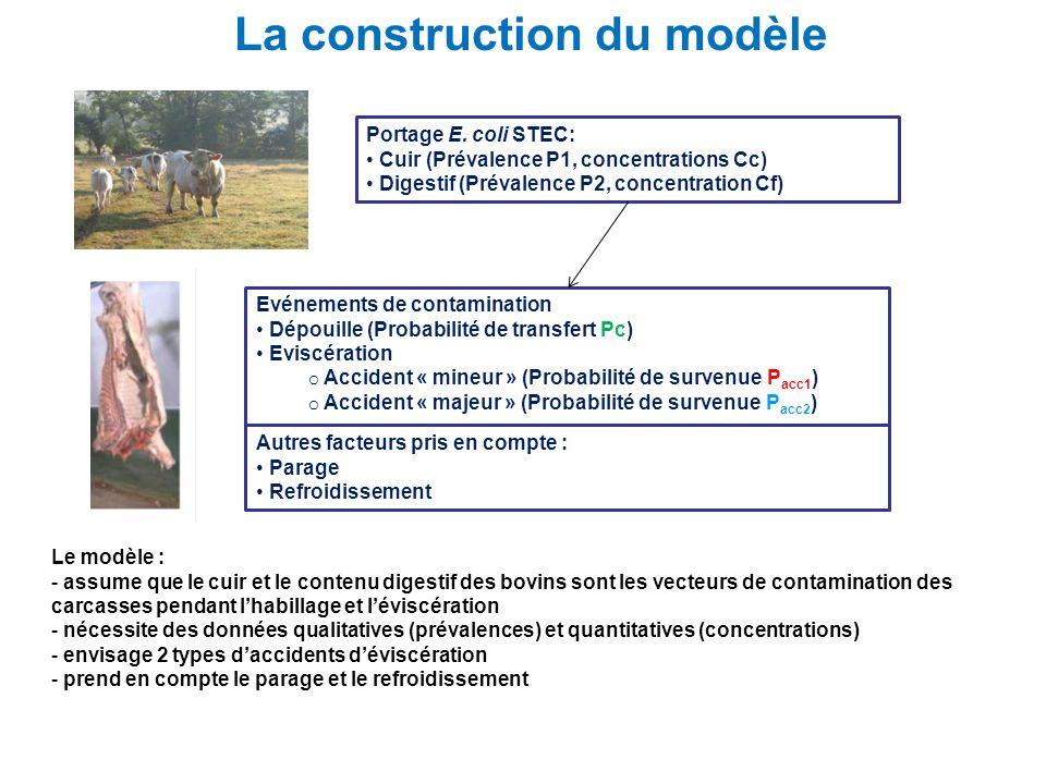 La construction du modèle