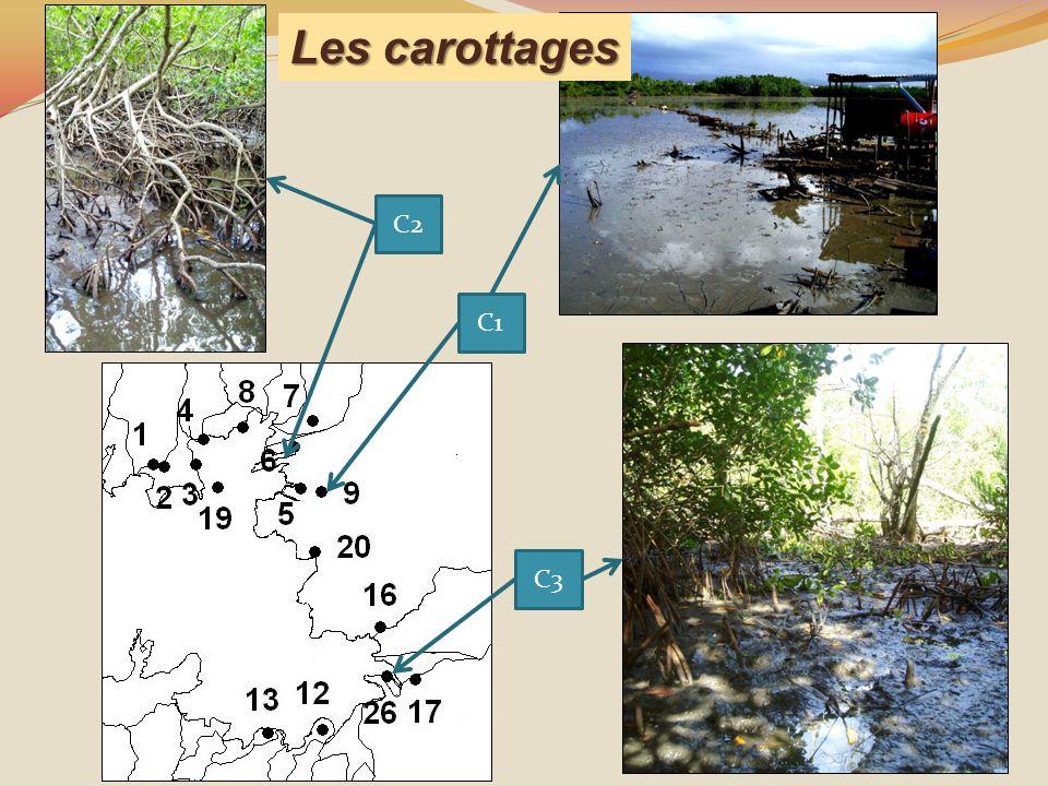 C2 Les carottages C1 C3