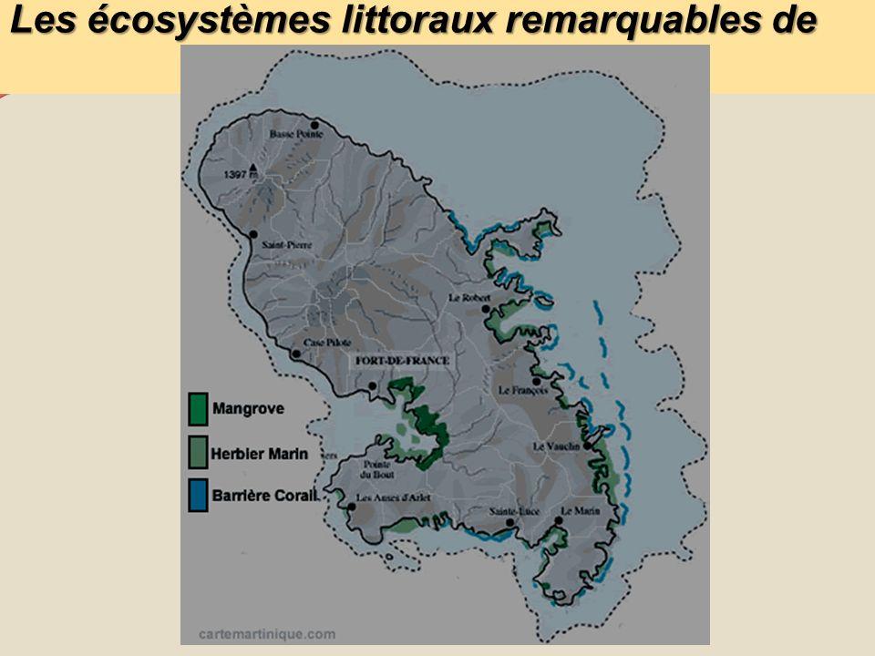 Les écosystèmes littoraux remarquables de