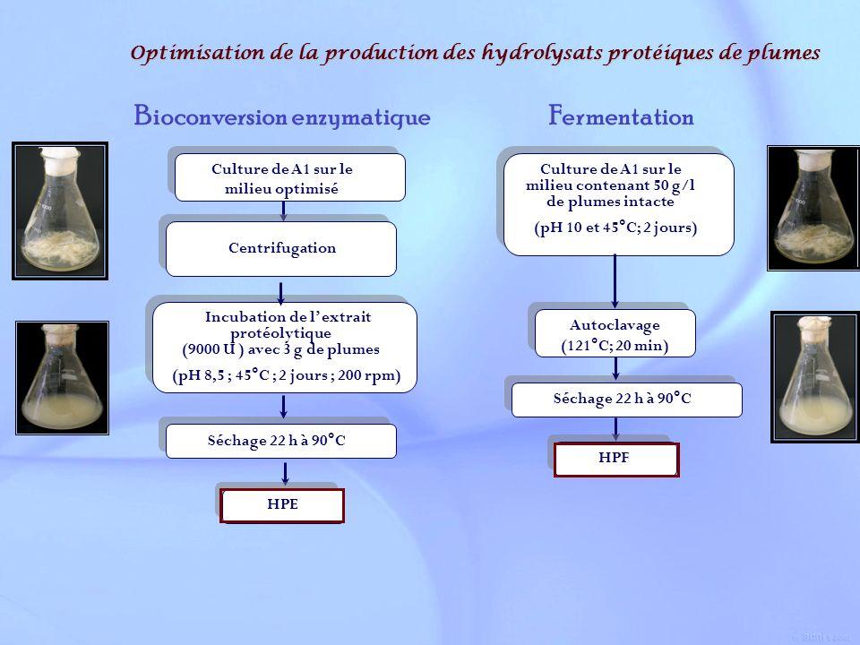 Optimisation de la production des hydrolysats protéiques de plumes