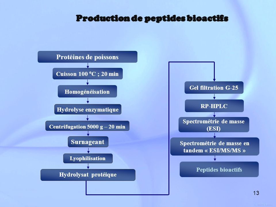 Production de peptides bioactifs