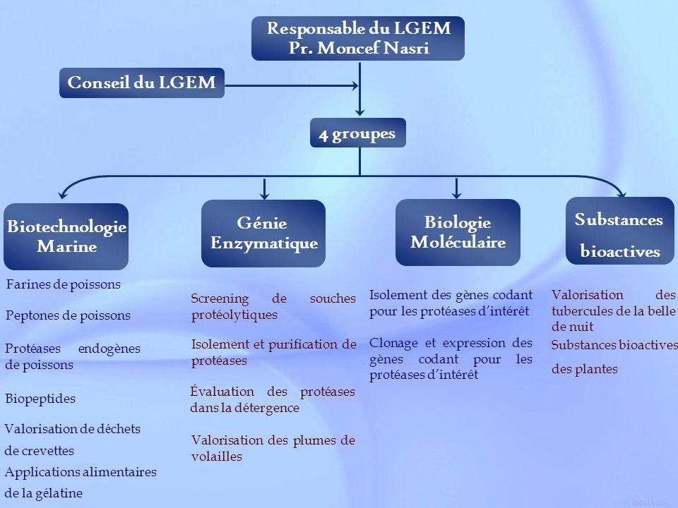 Responsable du LGEM Pr. Moncef Nasri Conseil du LGEM 4 groupes