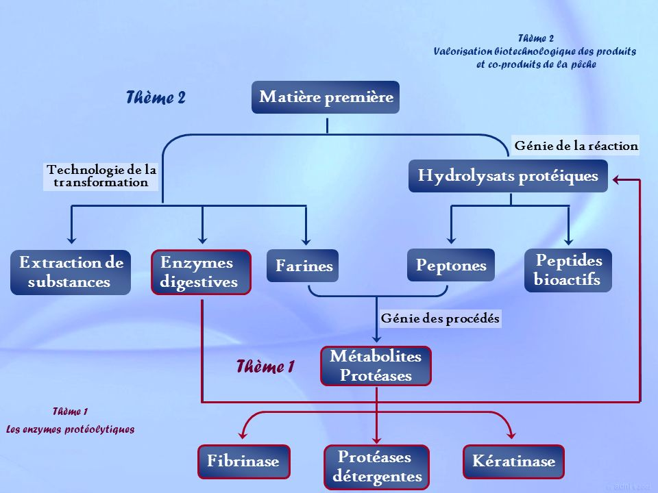 Hydrolysats protéiques Technologie de la transformation