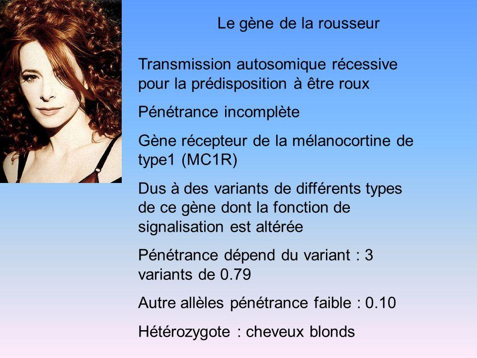 Le gène de la rousseur Transmission autosomique récessive pour la prédisposition à être roux. Pénétrance incomplète.