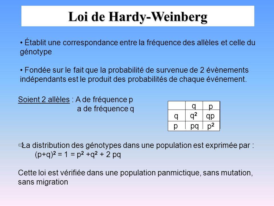 Loi de Hardy-Weinberg Établit une correspondance entre la fréquence des allèles et celle du génotype.