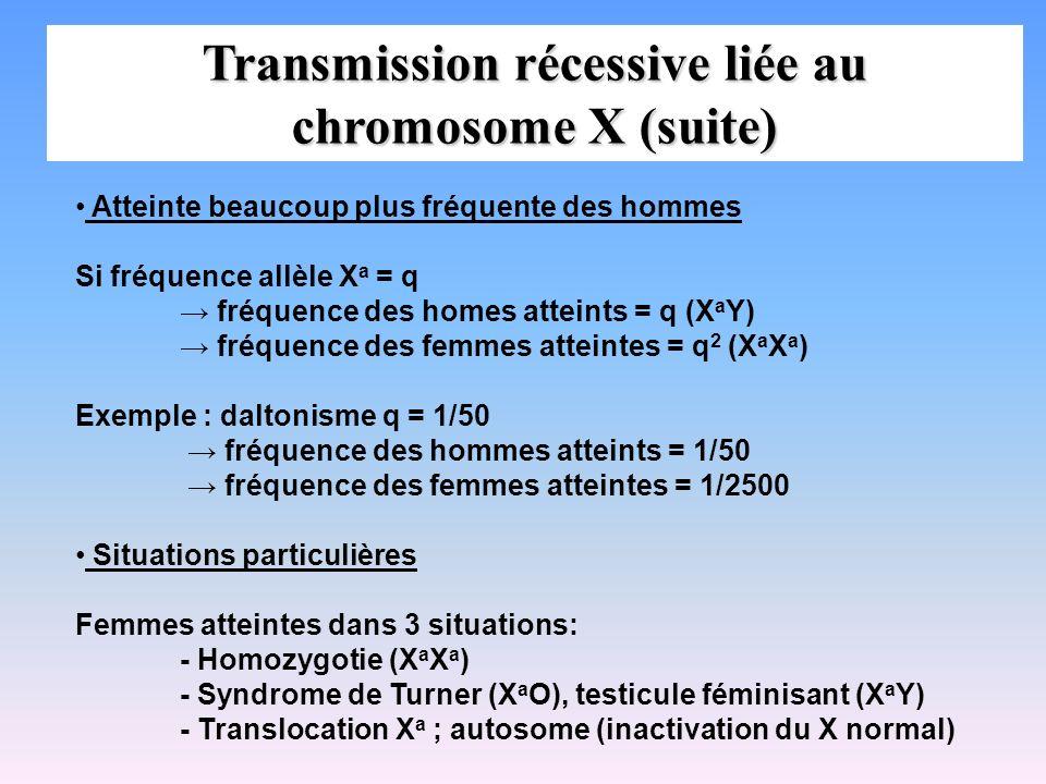 Transmission récessive liée au chromosome X (suite)