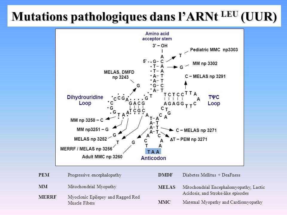 Mutations pathologiques dans l'ARNt LEU (UUR)