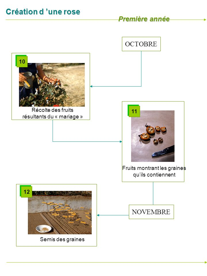 Première année OCTOBRE NOVEMBRE 10 Récolte des fruits 11