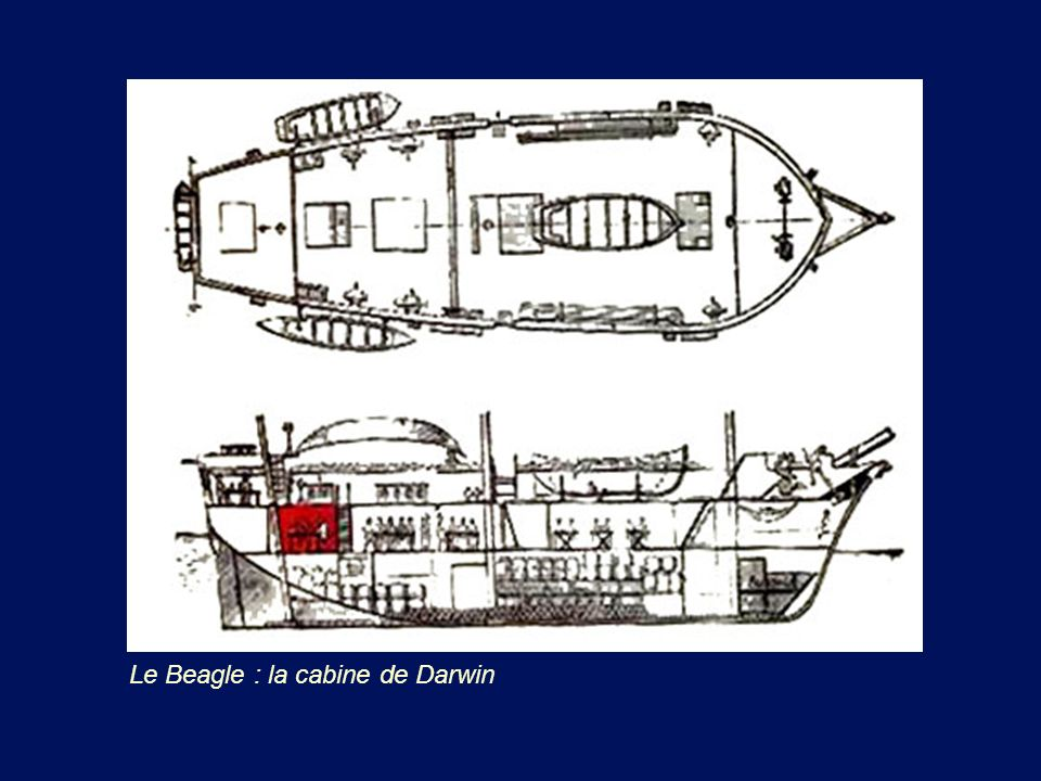 Le Beagle : la cabine de Darwin