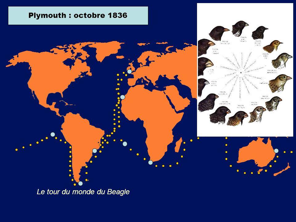 Ile de Sainte-Hélène : juillet 1836 Plymouth : octobre 1836