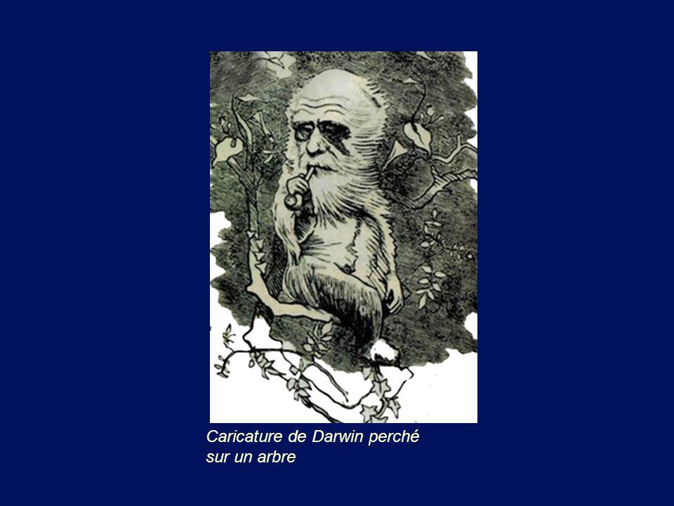 Caricature de Darwin perché sur un arbre