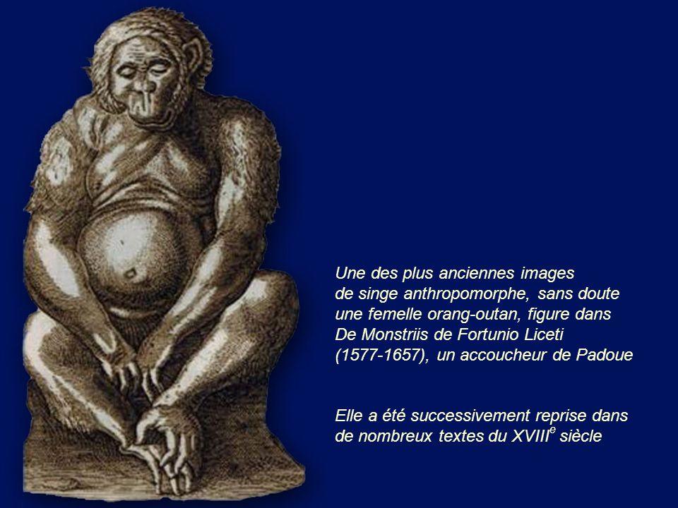 Une des plus anciennes images de singe anthropomorphe, sans doute une femelle orang-outan, figure dans De Monstriis de Fortunio Liceti (1577-1657), un accoucheur de Padoue
