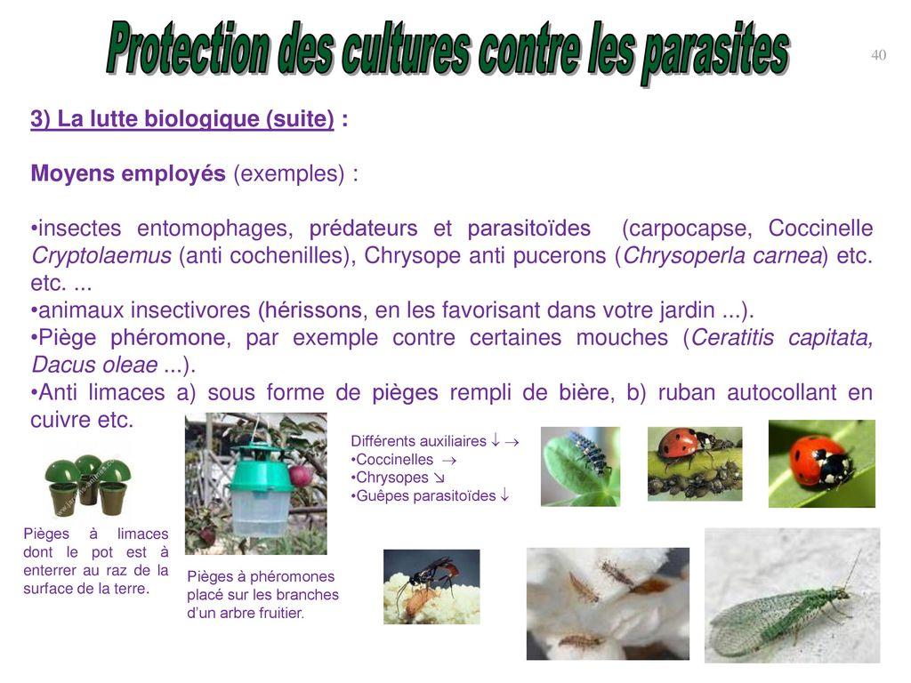 Protection des cultures contre parasites ravageurs et - La lutte biologique au jardin ...