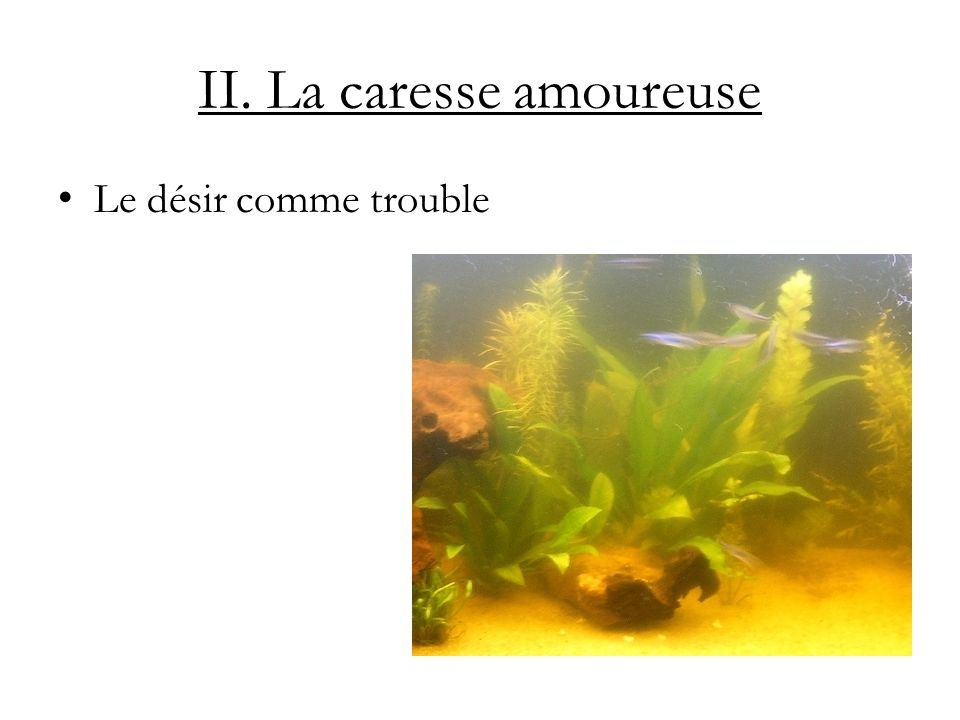 II. La caresse amoureuse