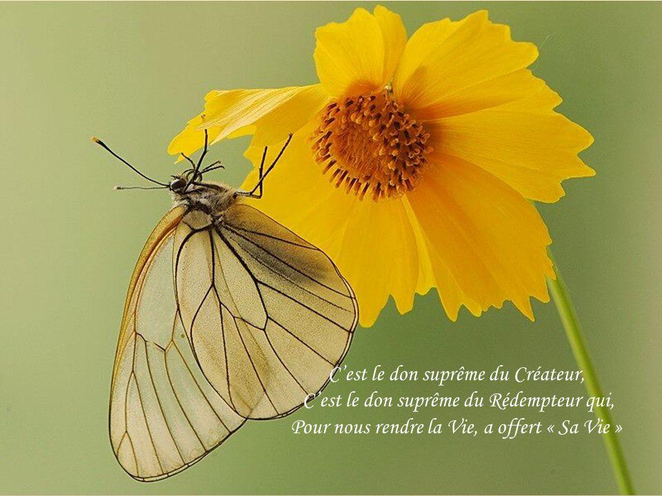 C'est le don suprême du Créateur, C'est le don suprême du Rédempteur qui, Pour nous rendre la Vie, a offert « Sa Vie »