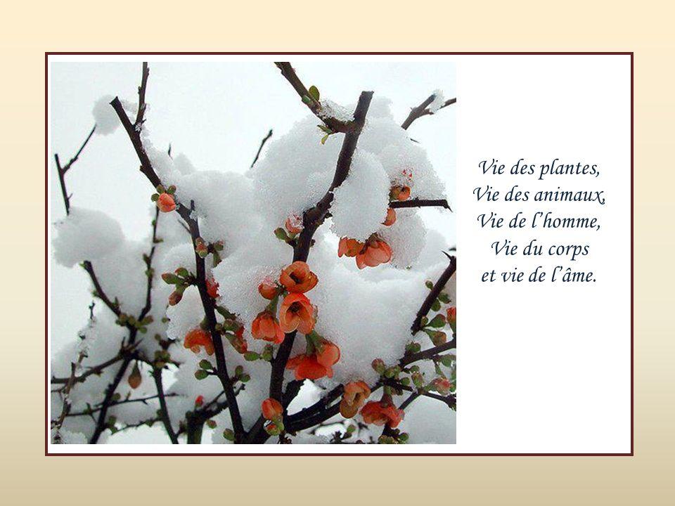 Vie des plantes, Vie des animaux, Vie de l'homme, Vie du corps et vie de l'âme.