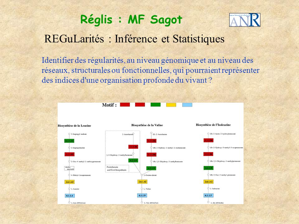 REGuLarités : Inférence et Statistiques