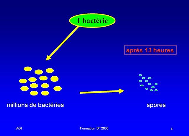 1 bactérie après 13 heures millions de bactéries spores AOI