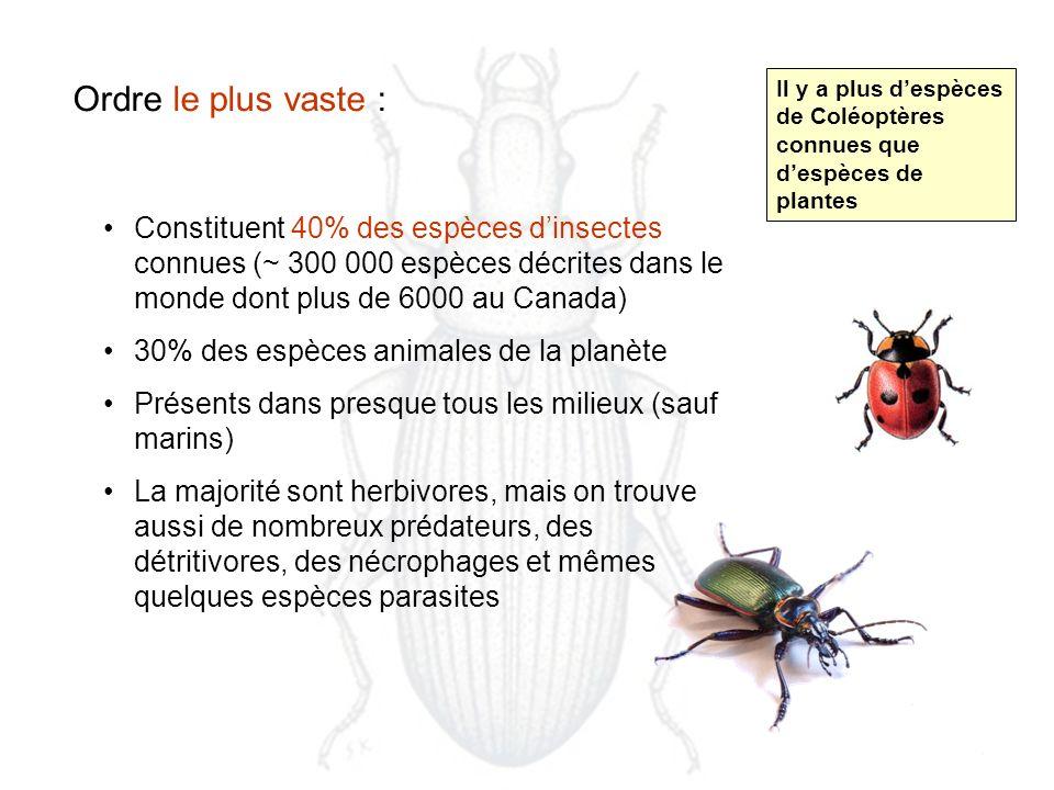 Ordre le plus vaste : Il y a plus d'espèces de Coléoptères connues que d'espèces de plantes.