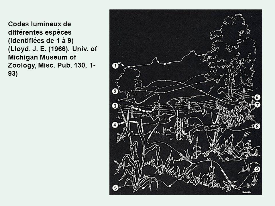Codes lumineux de différentes espèces (identifiées de 1 à 9) (Lloyd, J