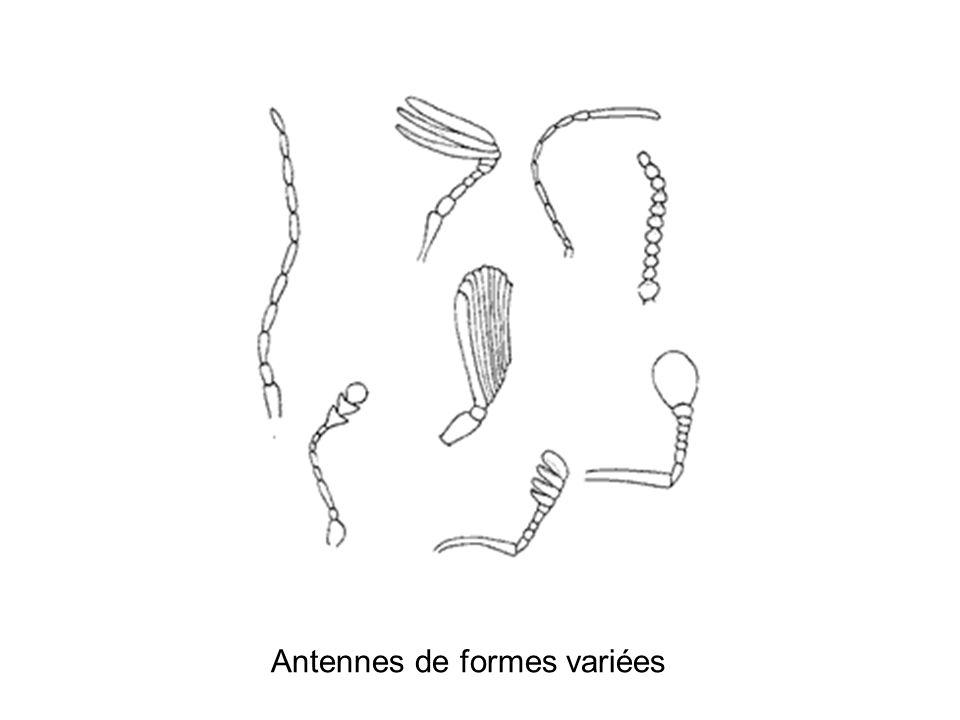 Antennes de formes variées