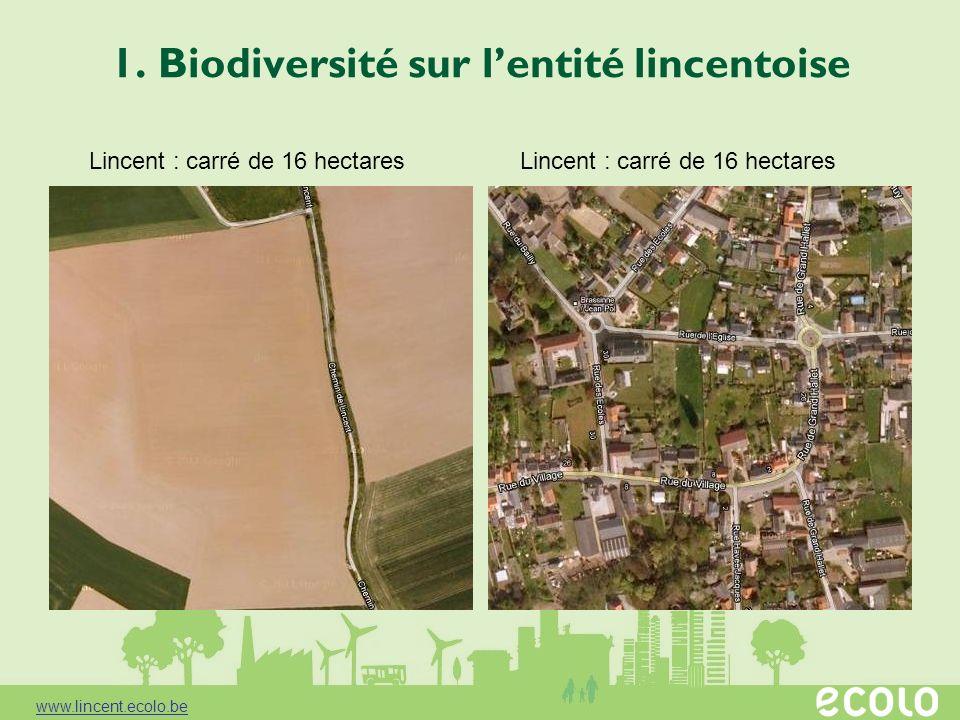 1. Biodiversité sur l'entité lincentoise