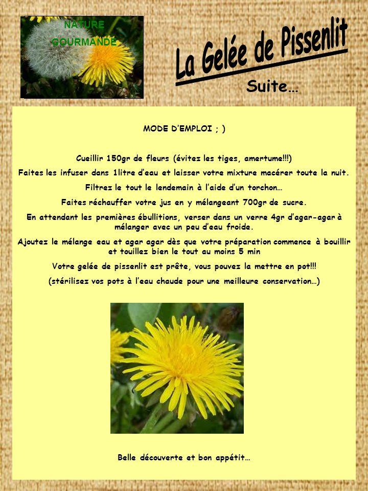 La Gelée de Pissenlit Suite… NATURE GOURMANDE MODE D'EMPLOI ; )