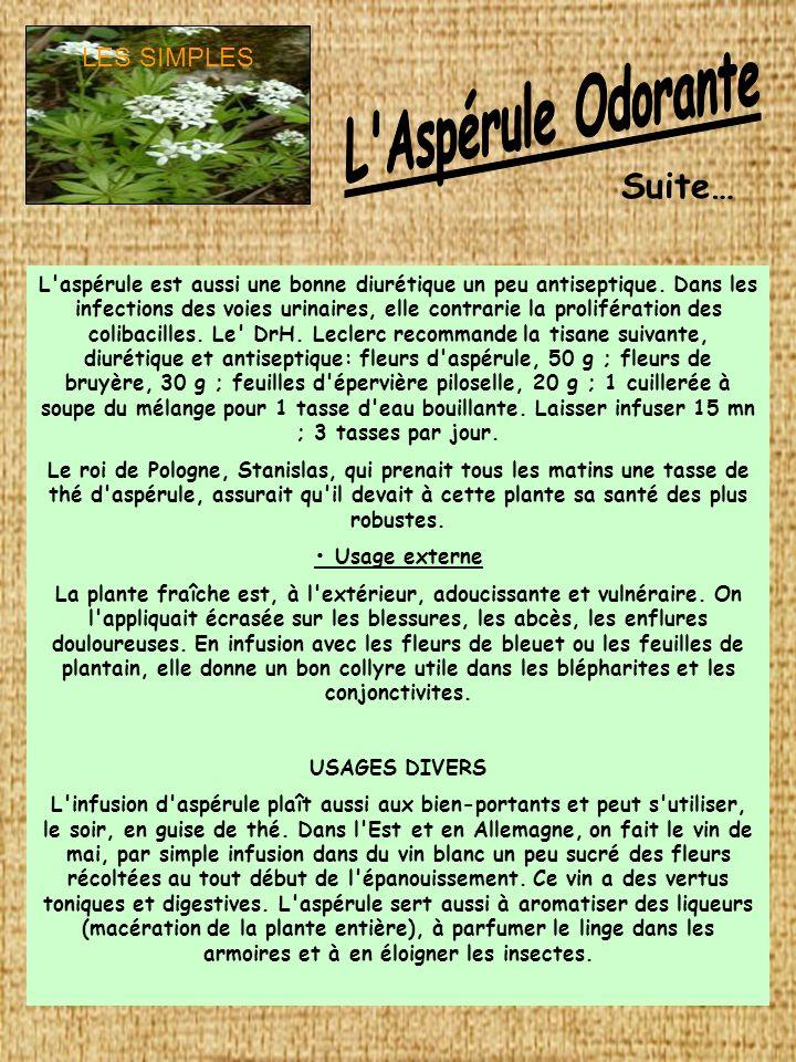 L Aspérule Odorante Suite… LES SIMPLES