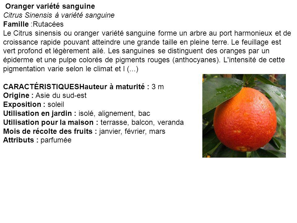 Oranger variété sanguine