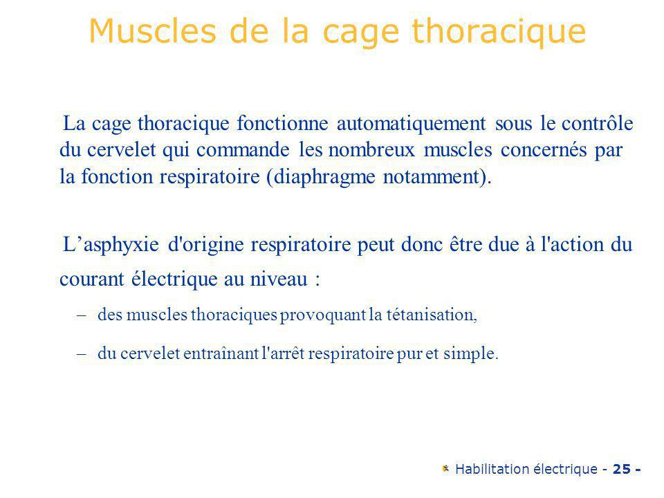 Muscles de la cage thoracique