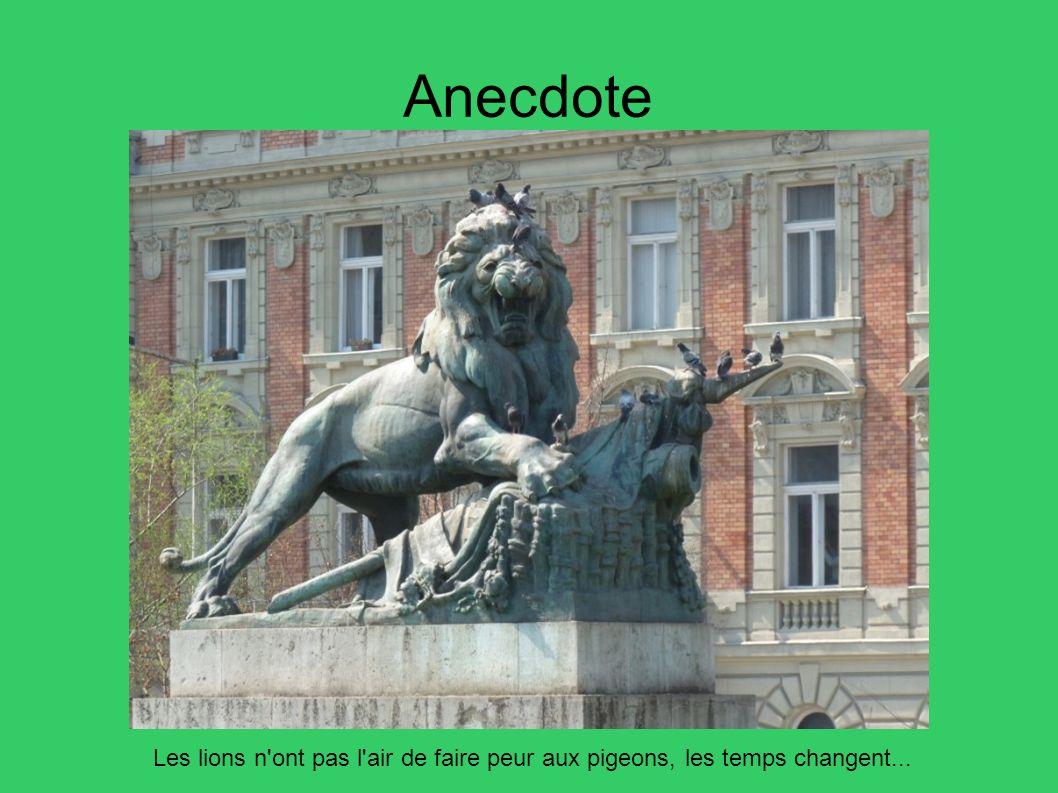 Anecdote Les lions n ont pas l air de faire peur aux pigeons, les temps changent... 15