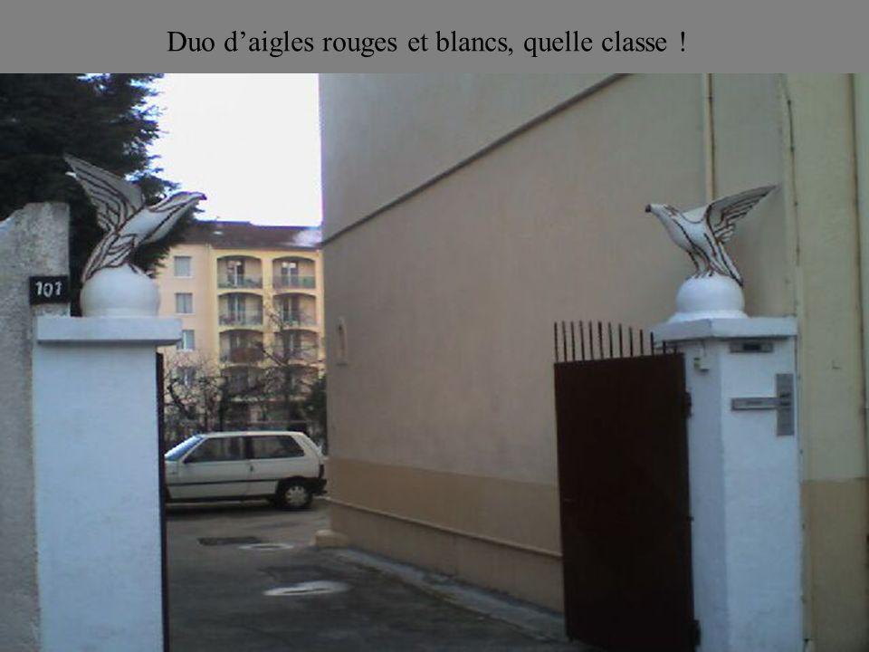 Duo d'aigles rouges et blancs, quelle classe !