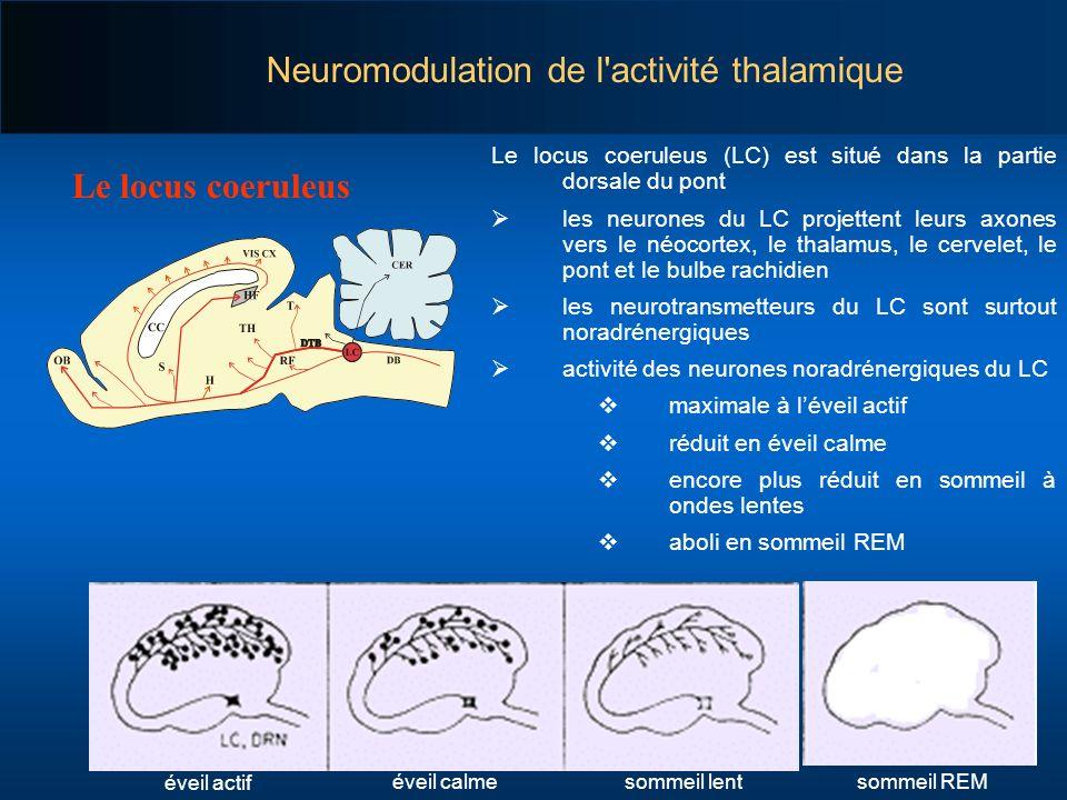 Neuromodulation de l activité thalamique