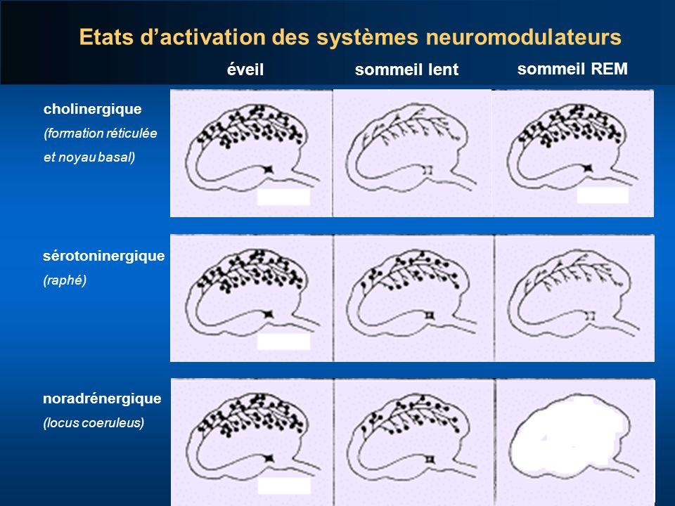 Etats d'activation des systèmes neuromodulateurs