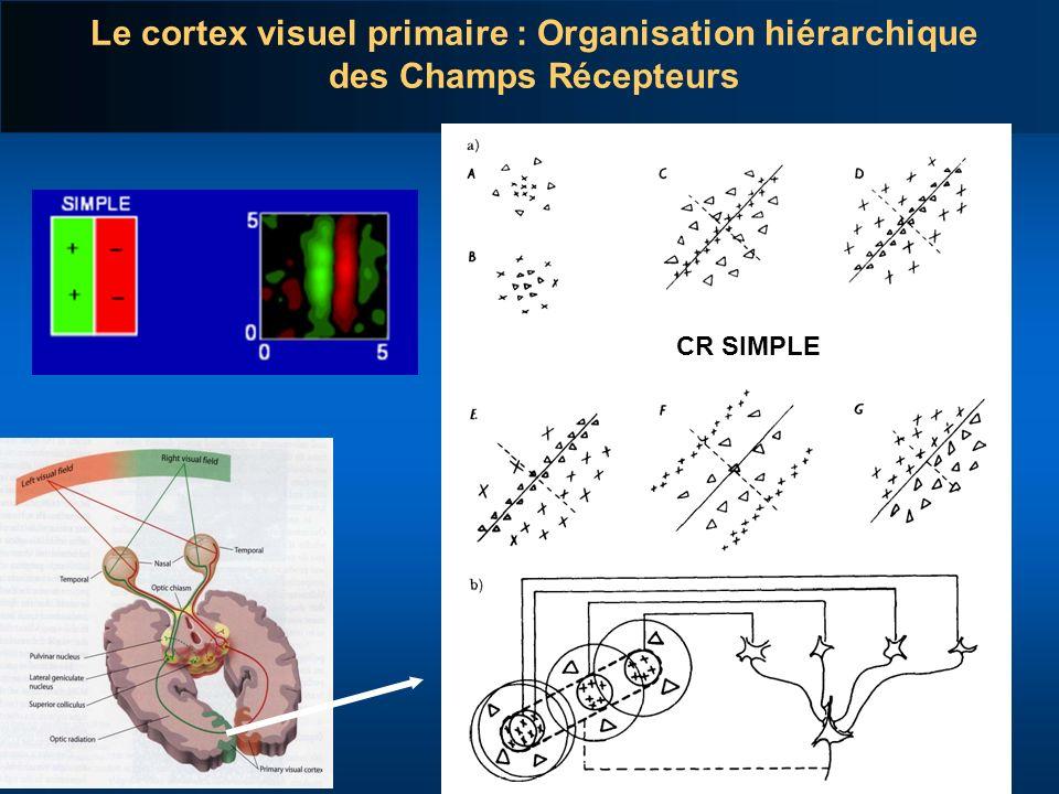 Le cortex visuel primaire : Organisation hiérarchique des Champs Récepteurs