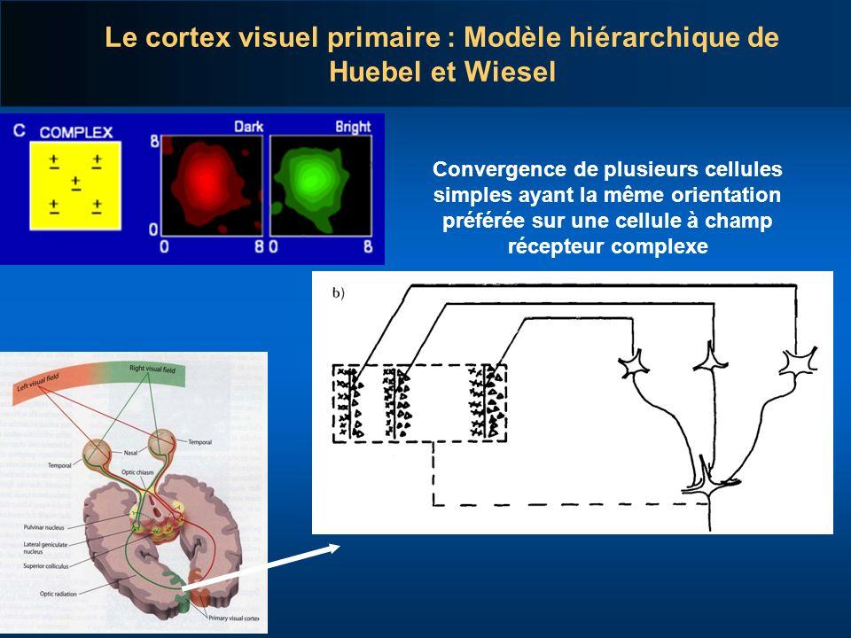 Le cortex visuel primaire : Modèle hiérarchique de Huebel et Wiesel