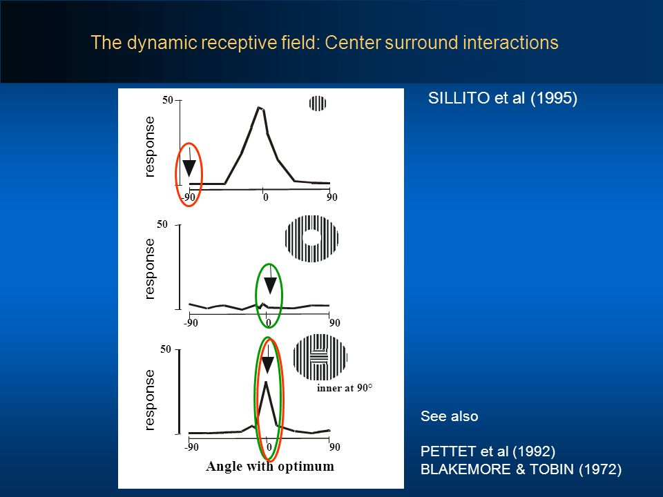 The dynamic receptive field: Center surround interactions