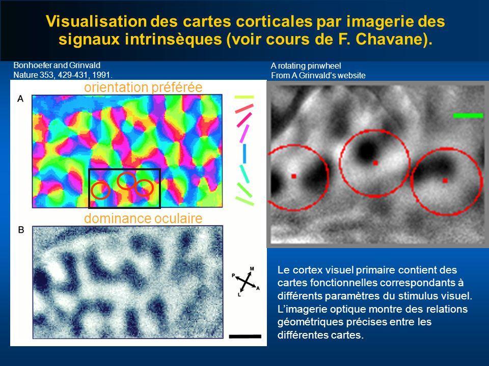 Visualisation des cartes corticales par imagerie des signaux intrinsèques (voir cours de F. Chavane).