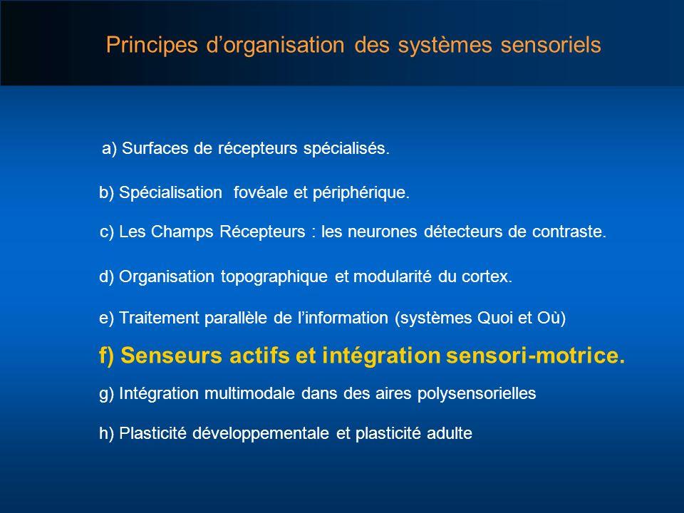 Principes d'organisation des systèmes sensoriels