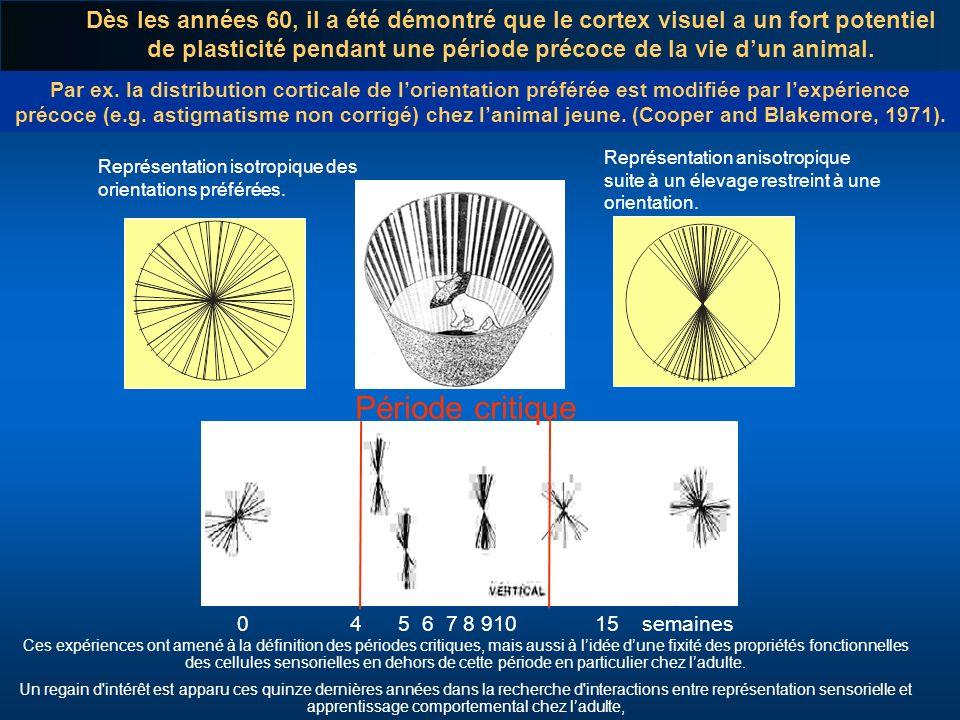 Dès les années 60, il a été démontré que le cortex visuel a un fort potentiel de plasticité pendant une période précoce de la vie d'un animal.