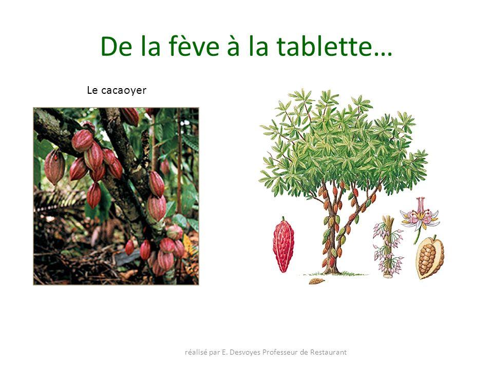 De la fève à la tablette…