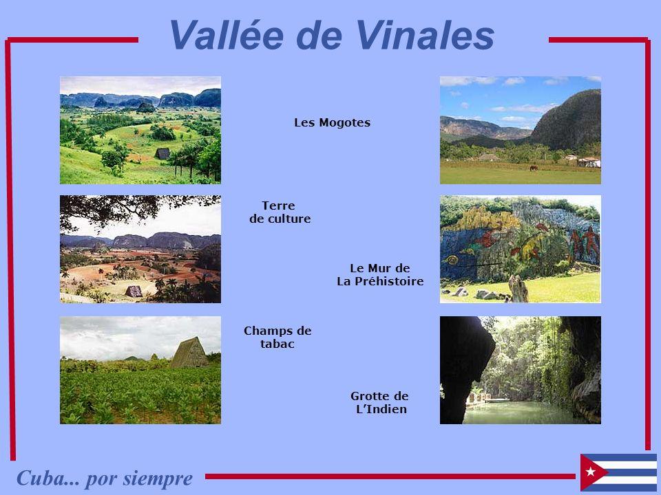 Vallée de Vinales Cuba... por siempre Les Mogotes Terre de culture